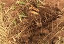 RDC: La plupart des 42 fosses communes auraient été creusées par des éléments des FARDC (ONU)