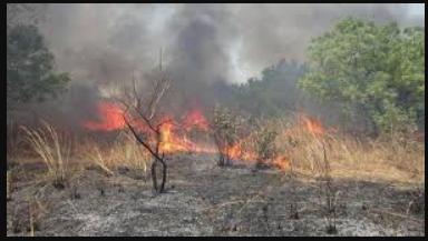 Les feux de brousse, un gâchis environnemental aux conséquences monumentales